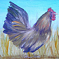 Black Copper Maran Rooster by Judy Bruning