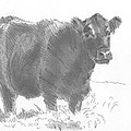 Black Cow Pencil Sketch by Mike Jory