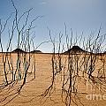 Black Desert by Juergen Ritterbach