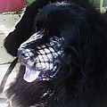 Black Dog by Eric  Schiabor