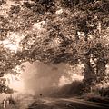 Black Dog On A Misty Road. Misty Roads Of Scotland by Jenny Rainbow
