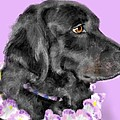 Black Dog Pretty In Lavender by Lois Ivancin Tavaf