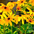 Black Eyed Susan by Dale Powell