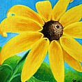 Black Eyed Susan by Sharon Marcella Marston