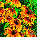 Black Eyed Susans by Michael Moriarty