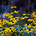 Black-eyed Susans by Patricia Griffin Brett