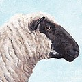 Black Face Sheep by Charlotte Yealey