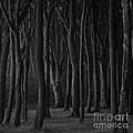 Black Forest by Heiko Koehrer-Wagner