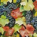 Black Grapes by Dragica  Micki Fortuna