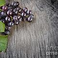 Black Grapes by Mythja  Photography