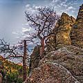 Black Hills Boulders by Paul Freidlund
