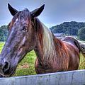 Black Horse At A Fence by Jonny D