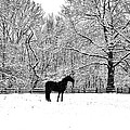 Black Horse In The Snow by Bill Cannon