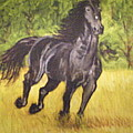 Black Horse by Terry Lewey