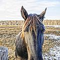 Black Horse by Viktor Birkus