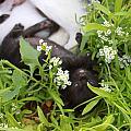 Black Kitten by Augusta Stylianou