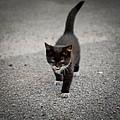 Black Kitten by Zina Stromberg