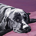 Black Labrador Beauty Sleep by Amy Reges