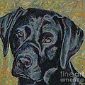 Black Labrador by Dragica  Micki Fortuna