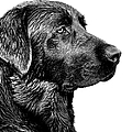 Black Labrador Retriever Dog Monochrome by Jennie Marie Schell