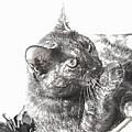 Black N White Cat by Dawn Whiteaker