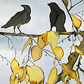 Black Ravens In Birch by Carolyn Doe