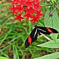 Black Red And White Butterfly by MTBobbins Photography