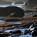 Black Rocks Lichen And Sea  by Belinda Greb