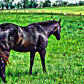 Black Stallion In Pasture by Alice Gipson