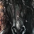Black Stallion by Sean Parnell