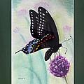 Black Swallowtail Butterfly By George Wood by Karen Adams