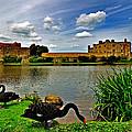 Black Swans At Leeds Castle II by Bel Menpes