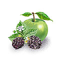 Blackberries And Green Apple by Irina Sztukowski
