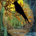 Blackbird by Gillian Singleton