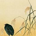 Blackbird by Japanese School