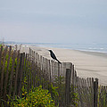 Blackbird On A Fence On The Beach by Bill Cannon