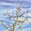 Blackbirds In A Tree by Angela Stanton