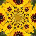 Blackeyed Susan Kaleidoscope by Sheri McLeroy