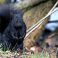 Blackie by Sharon Talson