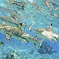 Blacktip Reef Shark by M Swiet Productions