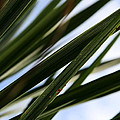 Blades Of Grass by Neal Eslinger