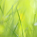 Blades Of Grass - Green Spring Meadow - Abstract Soft Blurred by Matthias Hauser