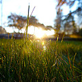 Blades Of Grassy Light by Fabien White