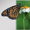 Blank Greeting Card 5 by Leticia Latocki
