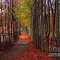 Blanket Of Red Leaves by Marcia Lee Jones