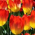 Blazing Color by Bruce Bley