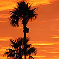 Blazing Sunset by Deb Halloran