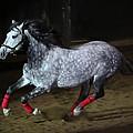 Blazzing Horse by Athena Mckinzie