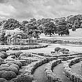 Bleak Topiary  by Mair Hunt