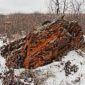 Bleak Winter Arctic Steppe Orange Lichens Rock by Stephan Pietzko